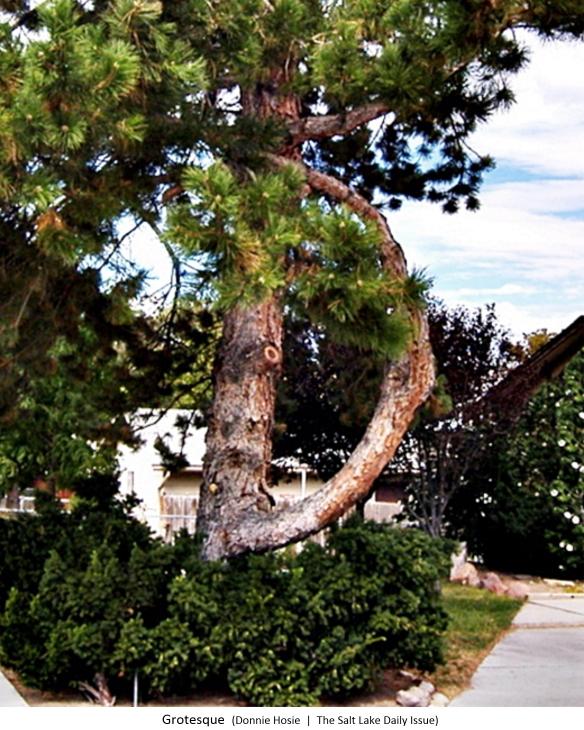 bent-tree-584x7304